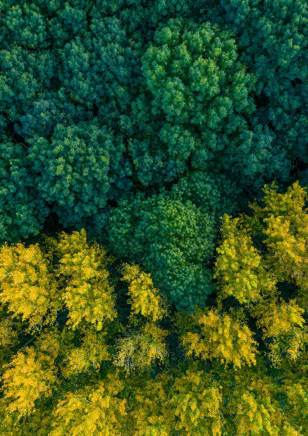 Contrast forest - drone photo